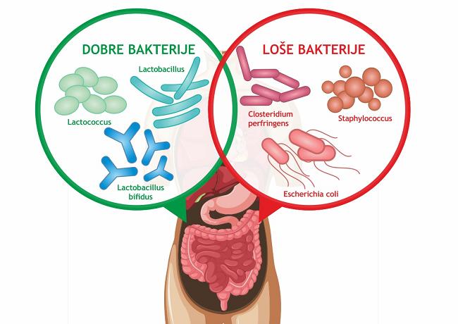 Polifenoli i polisaharidi iz kivija pomažu rastu dobrih bakterija - Kivilaks