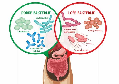 Ravnoteža dobrih i loših bakterija u našim crijevima utječe na zdravlje probavnog sustava - Kivilaks