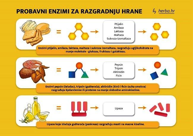 Kivilaks pomaže probavnim enzimima u razgradnji hrane